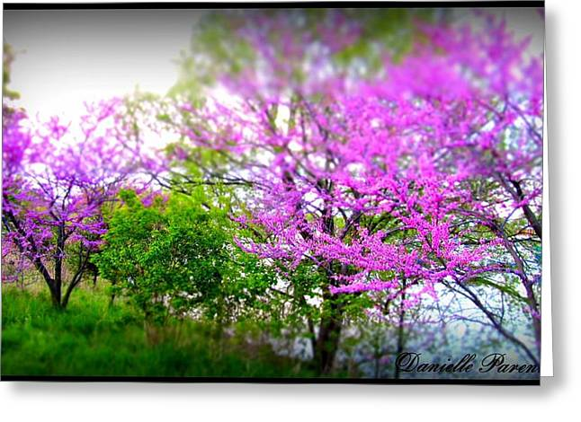 Greeting Card featuring the photograph Pretty In Pink Spring Blossoms by Danielle  Parent