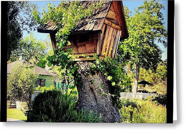 Pretty Much My #dreamhome. #tree Greeting Card