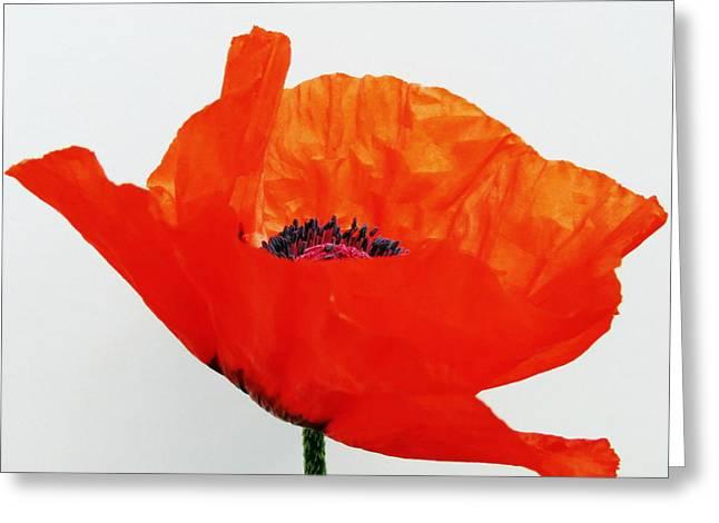 Pretty Poppy Greeting Card by Ramona Johnston