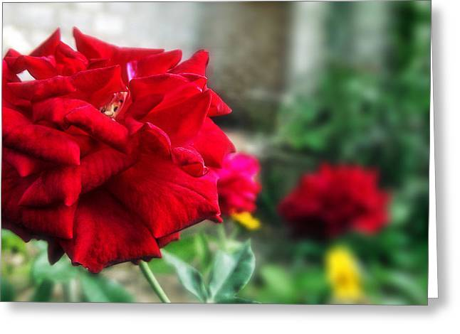 Pretty Red Rose Greeting Card by Dumindu Shanaka
