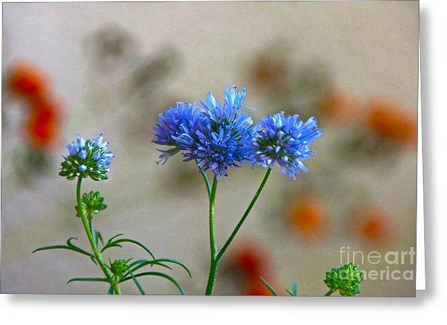 Pretty Weeds Greeting Card by Byron Varvarigos