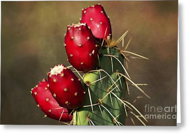 Prickley Pear Fruit Greeting Card