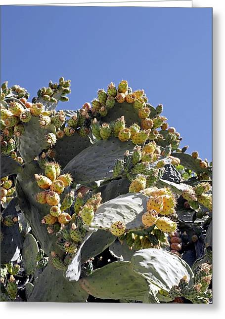 Prickly Pear Cacti (opuntia Sp.) Greeting Card by Carlos Dominguez