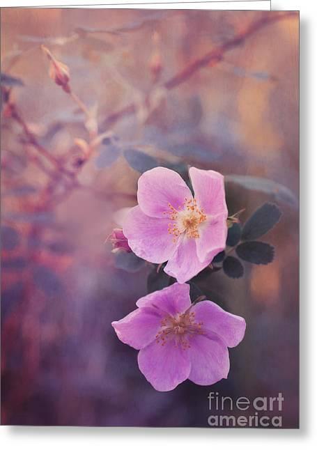 Prickly Rose Greeting Card