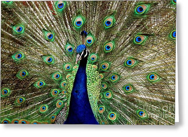 Greeting Card featuring the photograph Pride  by Johanne Peale