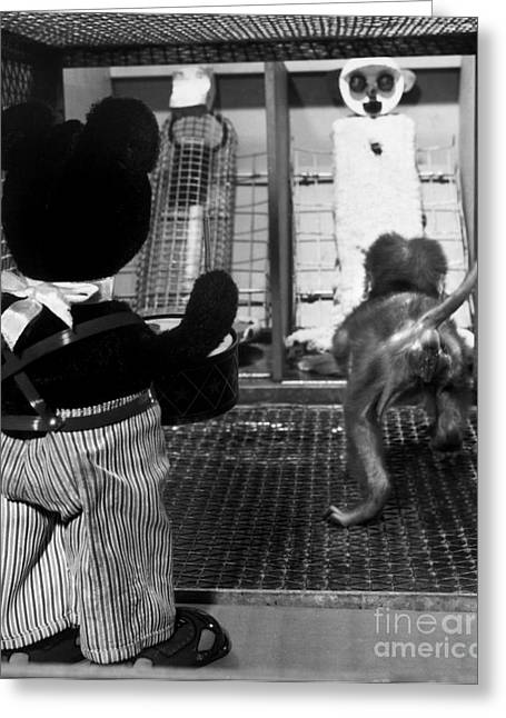 Primate Fear Testing Greeting Card by Science Source