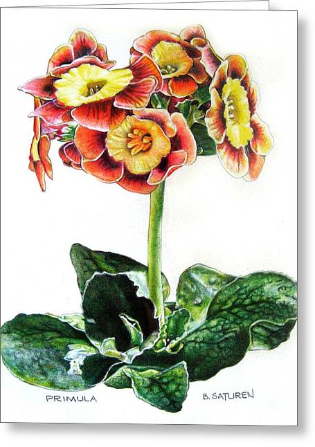 Primrose Greeting Card by Ben Saturen