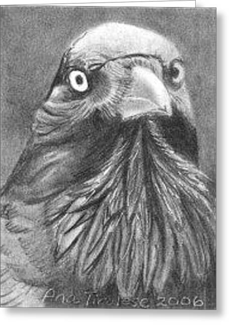 Greeting Card featuring the drawing Princely Raven - Aceo by Ana Tirolese