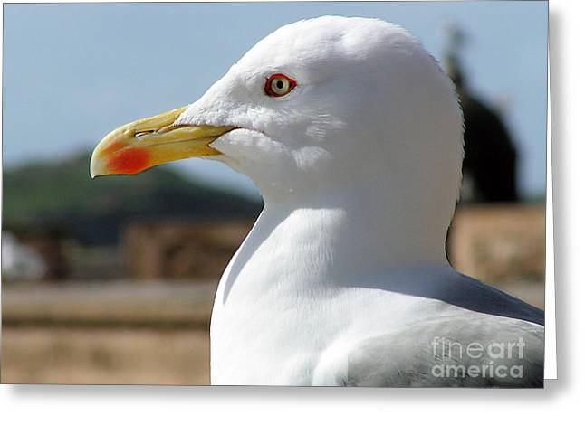 Greeting Card featuring the photograph Profile Of A Seagull  by Alexandra Jordankova