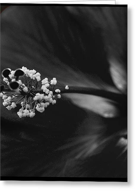 Projection In Black And Whiite Greeting Card by Barbara Middleton