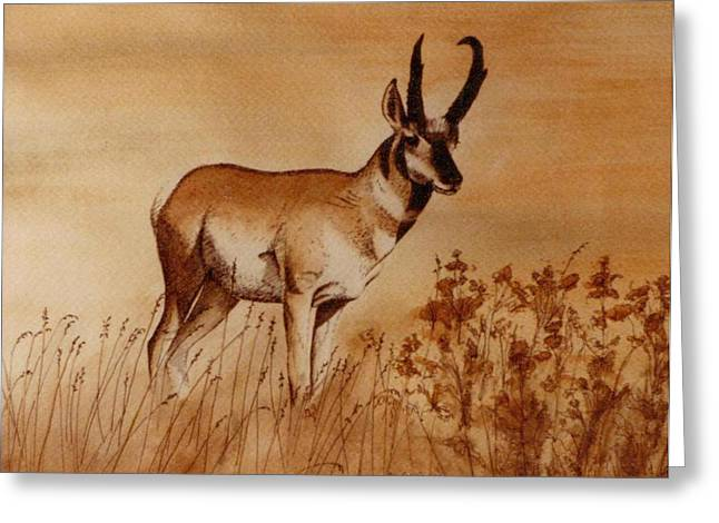 Pronghorn Antelope Greeting Card by Cindy Wright