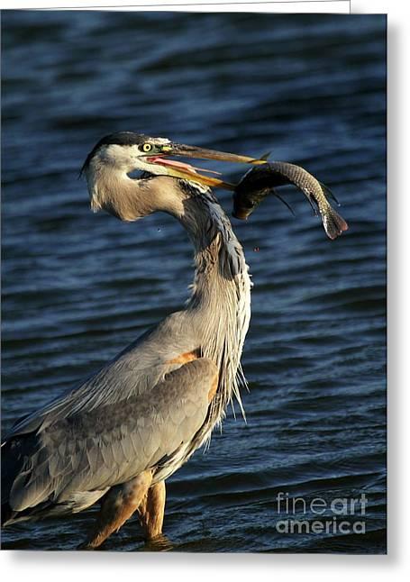 Proud Fisherman Greeting Card by Sabrina L Ryan