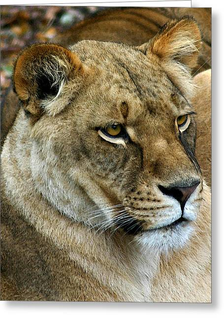 Proud Lioness Greeting Card