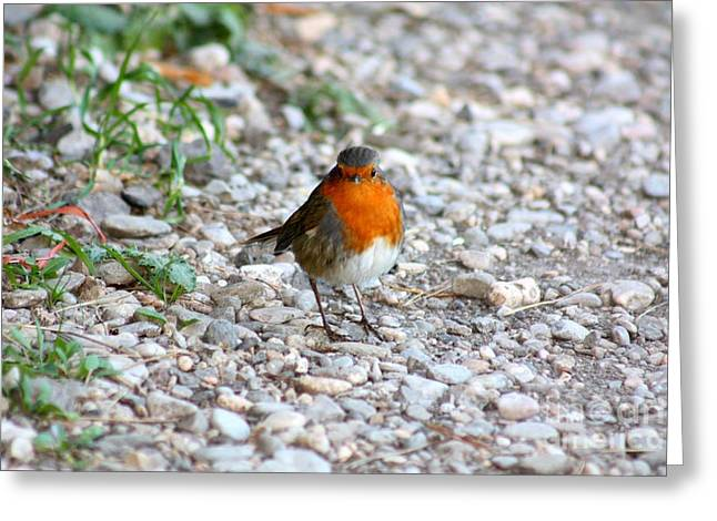 Greeting Card featuring the photograph Proud Little Bird by Rogerio Mariani
