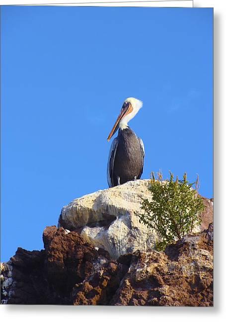 Proud Pelican Greeting Card by Ramie Liddle