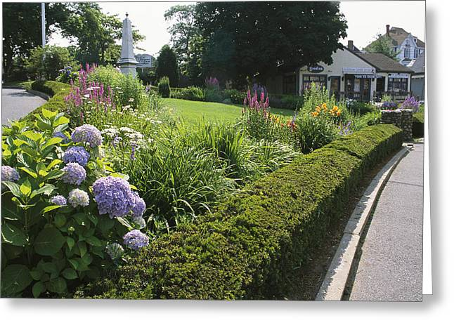 Public Garden With Blooming Hydrangeas Greeting Card