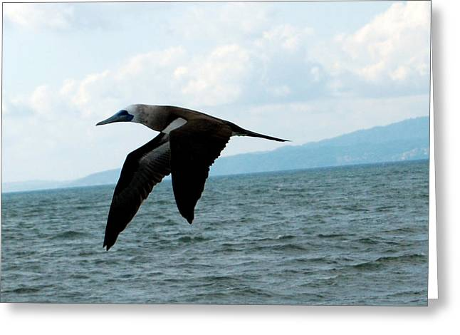Puerto Vallarta - A Bird In Flight  Greeting Card