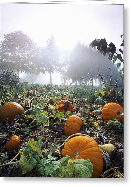 Pumpkin Patch, British Columbia Greeting Card by David Nunuk