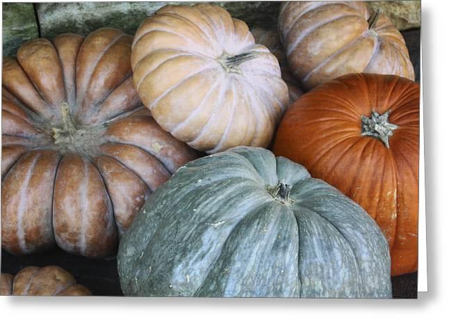 Pumpkin Patch Greeting Card by Joan Carroll