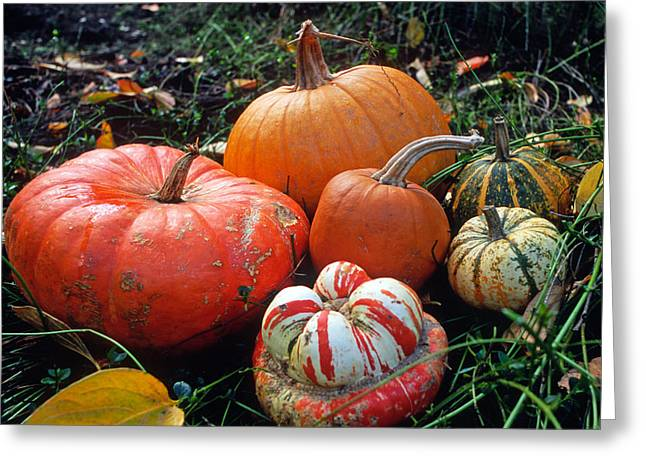 Pumpkin Patch Greeting Card by Kathy Yates