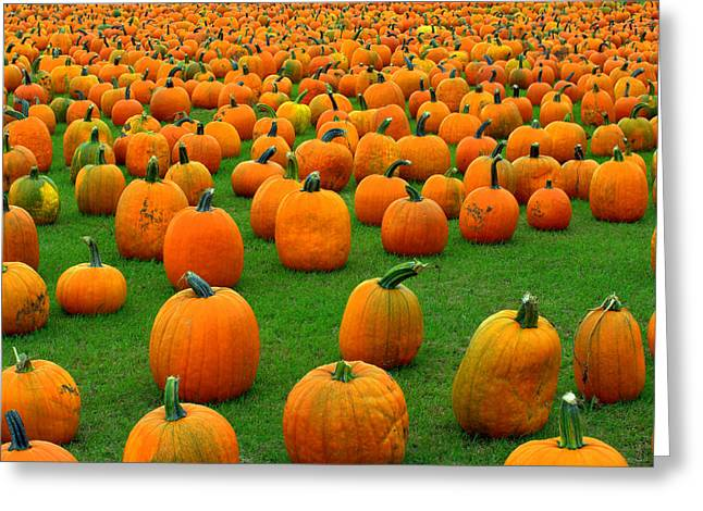 Pumpkins Forever Greeting Card by Susan Camden