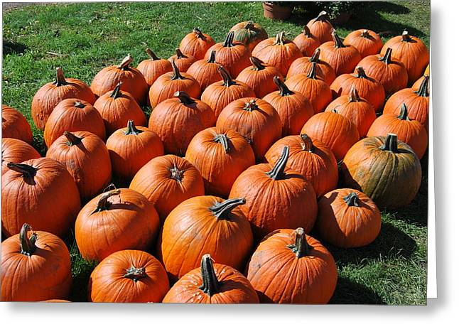 Pumpkins Galore Greeting Card