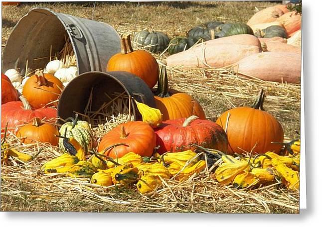 Pumpkins Greeting Card by Laurie Kidd