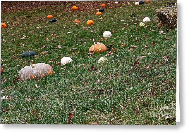 Pumpkins Greeting Card by Susan Herber