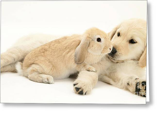 Pup With Rabbit Greeting Card by Jane Burton