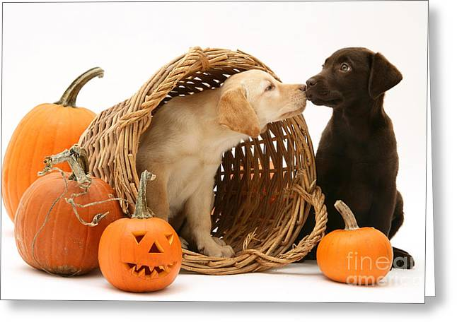 Puppies At Halloween Greeting Card by Jane Burton