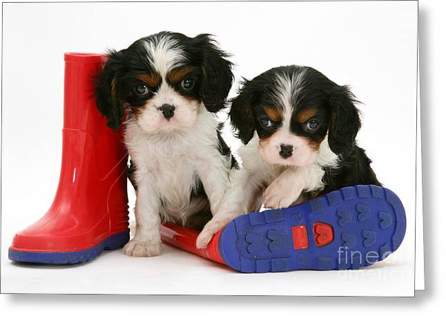 Puppies With Rain Boats Greeting Card by Jane Burton