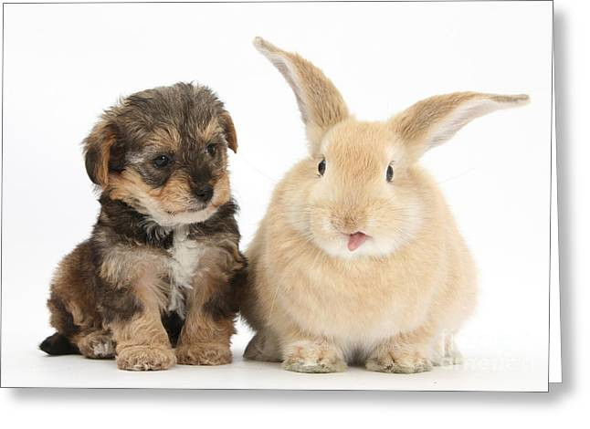 Puppy And Rabbit With Tongue Sticking Greeting Card by Mark Taylor