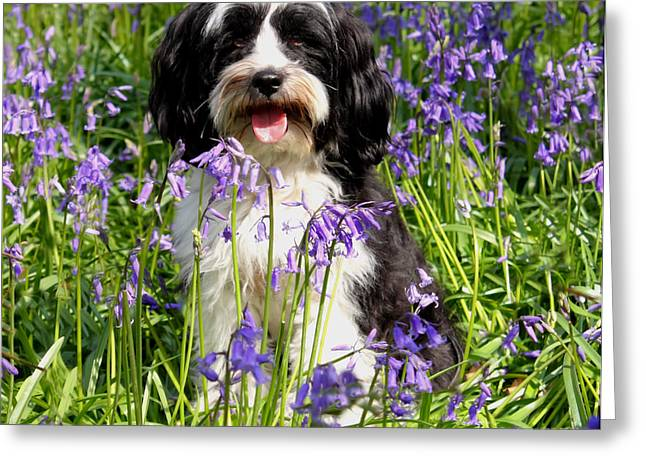Puppy In Bluebells Greeting Card by Simon Bratt Photography LRPS
