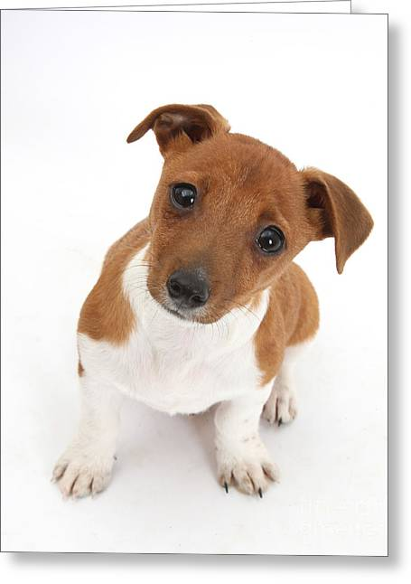 Puppy Looking Up Greeting Card by Mark Taylor