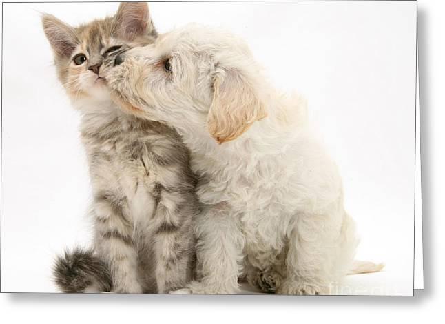 Puppy Nuzzles Kitten Greeting Card by Jane Burton