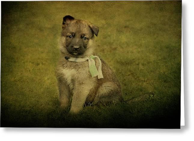 Puppy Sitting Greeting Card by Sandy Keeton