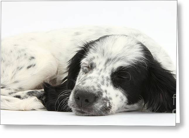 Puppy Sleeping Greeting Card by Mark Taylor