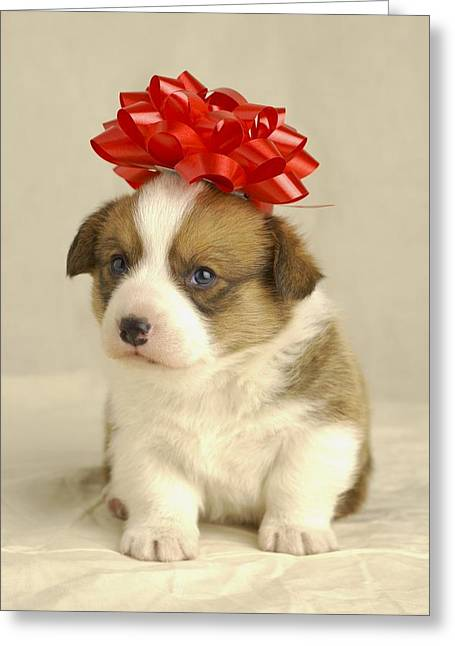Puppy Wearing A Red Bow Greeting Card by Ron Nickel