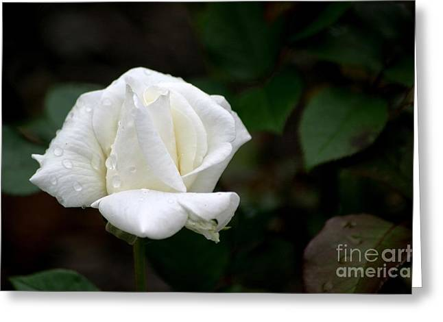 Pure As Snow Greeting Card by Living Color Photography Lorraine Lynch