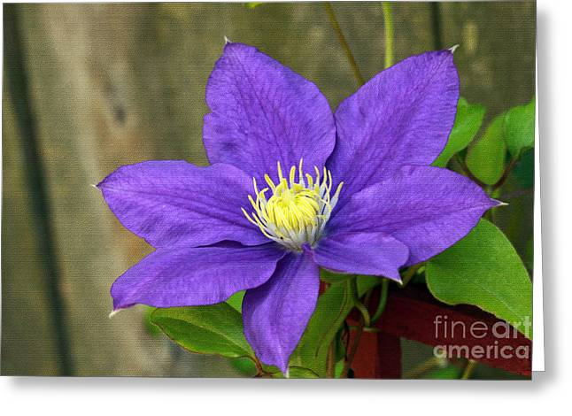 Greeting Card featuring the photograph Purple Clematis by Denise Pohl