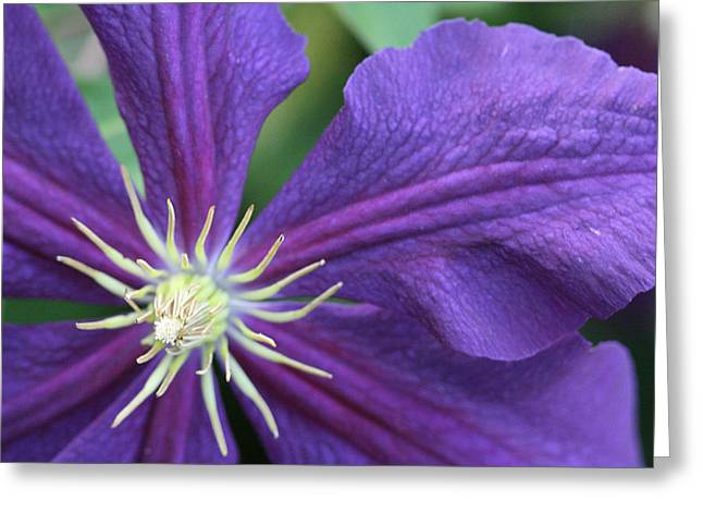Greeting Card featuring the photograph Purple Clematis by Peg Toliver
