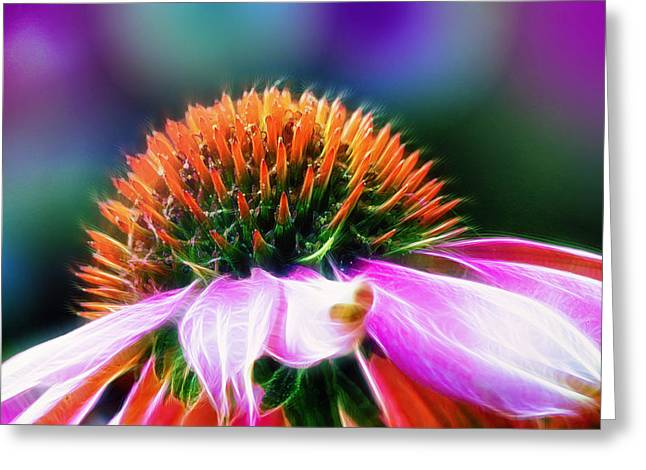 Purple Coneflower Delight Greeting Card by Bill Tiepelman