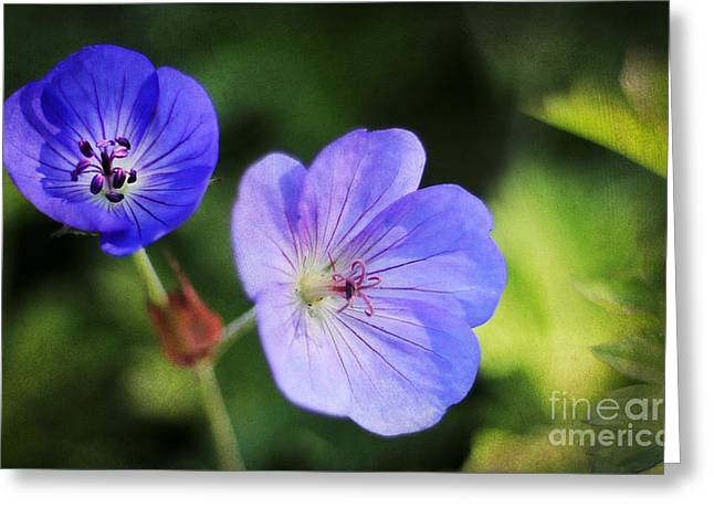 Purple Greeting Card by Darren Fisher