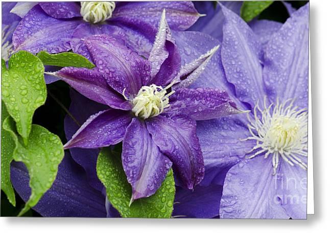 Purple Daze Greeting Card
