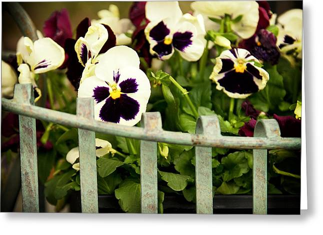 Purple Delights Greeting Card by Denis Lemay