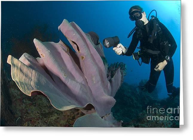 Purple Elephant Ear Sponge With Diver Greeting Card