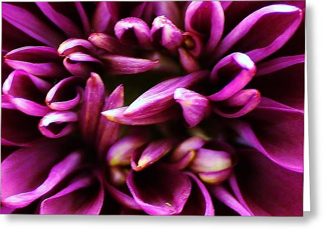 Purple Explosion Greeting Card by Bruce Bley