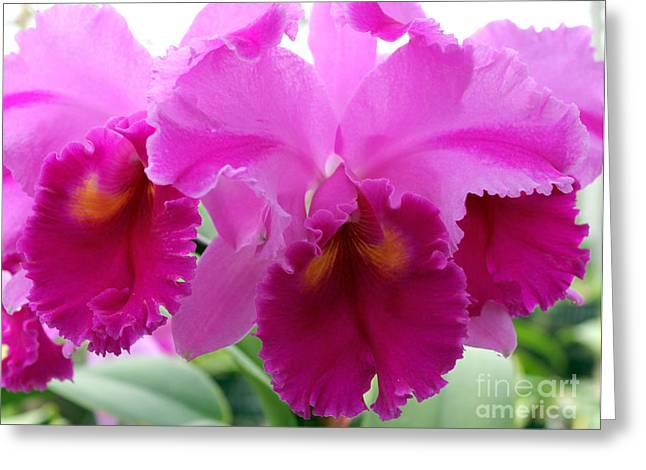 Greeting Card featuring the photograph Purple Explosion by Debbie Hart