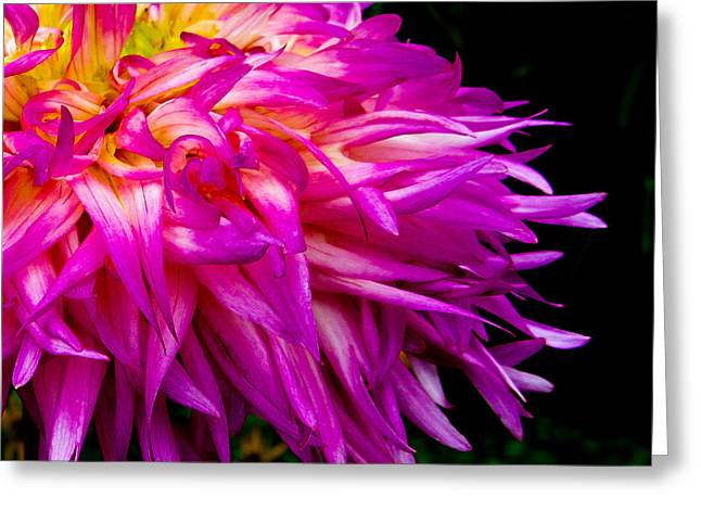 Purple Flames Greeting Card by Michael Taggart