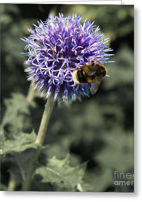 Purple Flower And Bee Greeting Card by Jo